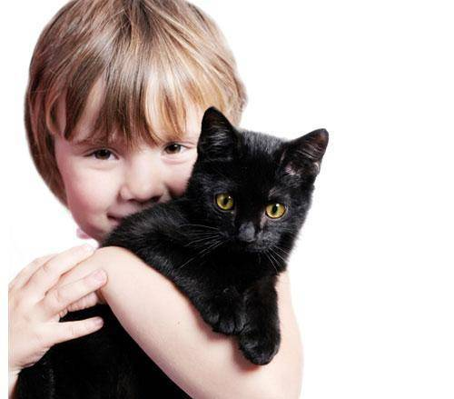 Bebés prematuros y gatos, ¿buena combinación?