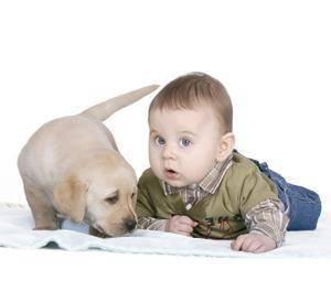 Cuida a tu mascota, protege a tu hijo