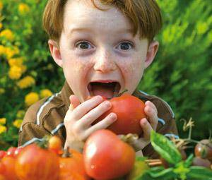 La alimentación del niño a partir de los 4 años