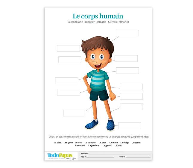 Ficha sobre vocabulario de las partes del cuerpo humano en francés ...