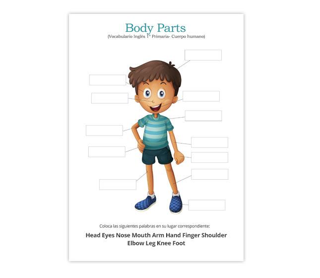 Partes del cuerpo en ingles para niños de primaria