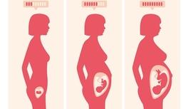 ¿Por qué el feto recibe ese nombre?