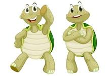 ¿Qué es la técnica de la tortuga y cómo aplicarla correctamente?