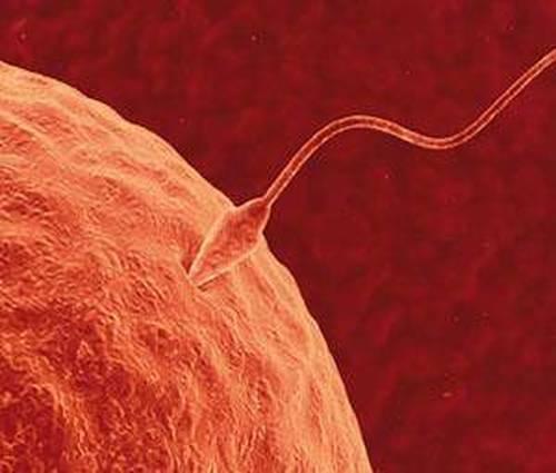 Calendario de ovulación y días fértiles para no quedar embarazada