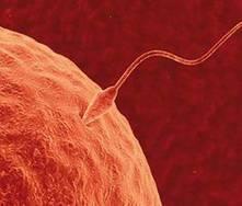 Síntomas del óvulo fecundado