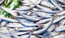 Cómo introducir el pescado en la alimentación del bebé